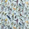 Birds Sinfonia