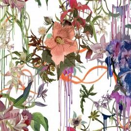 Orchids Fantasia