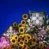 Flowers Galaxy Multicolore