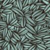 Succulente Gris bleu