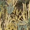 Algues Marron