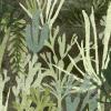 Algues Vert