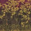 Les cerisiers sauvages Violet
